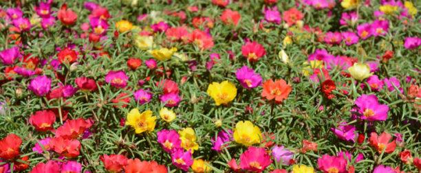 Çiçek isimleri listesi