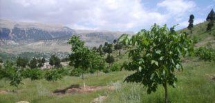 Ağaçlar kaç günde bir sulanmalı?