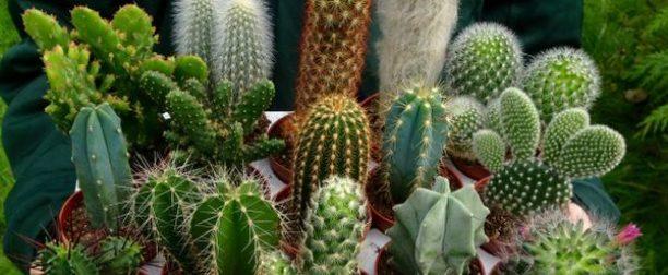 Kaktüs türleri ve çeşitleri nelerdir?