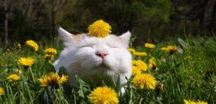Kedileri bahçeden uzak tutmanın yolları nelerdir?