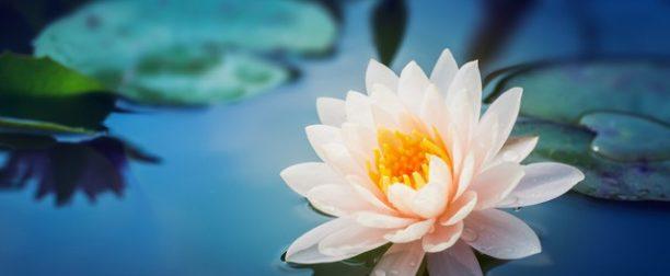 Nilüfer nasıl yetiştirilir? bakımı nasıl yapılır?