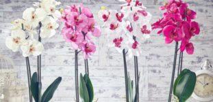 Orkide nasıl yetiştirilir? bakımı nasıl yapılır?