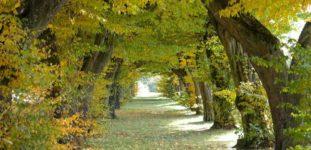 Gürgen Ağacı Nasıl Yetiştirilir? Bakımı Nasıl Yapılır?