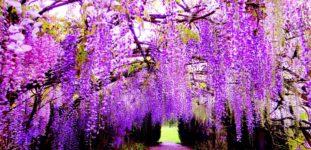Komar Ağacı Nasıl Yetiştirilir? Bakımı Nasıl Yapılır?