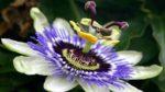 Saat Çiçeği Bakımı Nasıl Yapılır? Nasıl Yetiştirilir?
